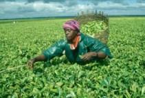 Fausta Mwinami Kibena