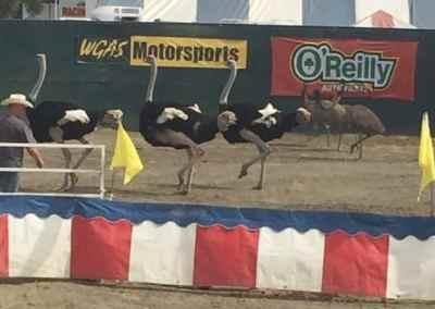 WGAS Motorsports Ostrich Racing