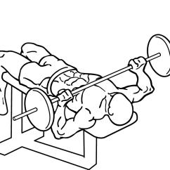 Triceps Brachii Diagram Rotary Dial Telephone Wiring Negativ Bankdrücken