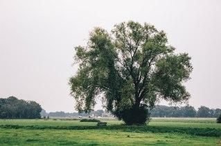 wendel-levensboom