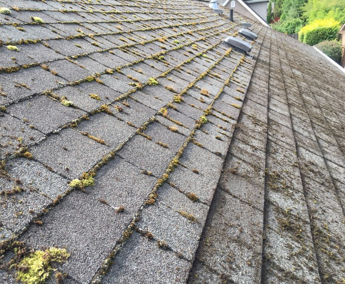 Roof-Cleaning-Showing-progress