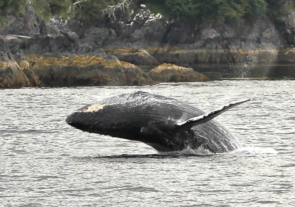 WhaleCoast Alaska Launches New Website!