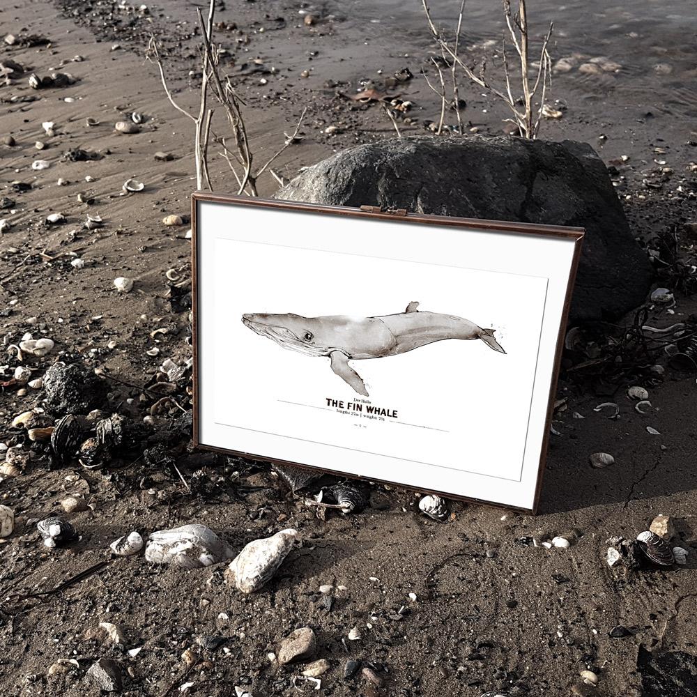 Wal Poster Finnwal