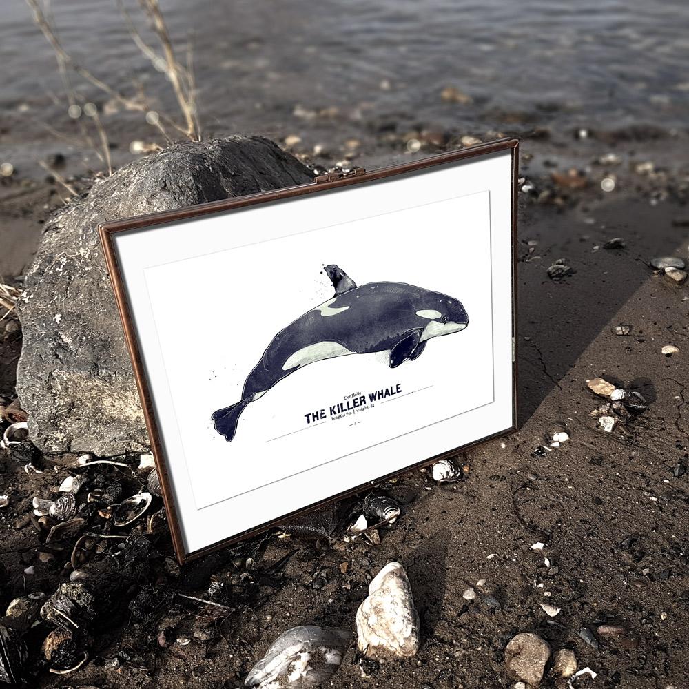 Wal Poster Orca