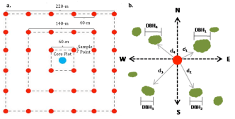 The design of (a) the line transects and (b) the point-quarter sampling method.