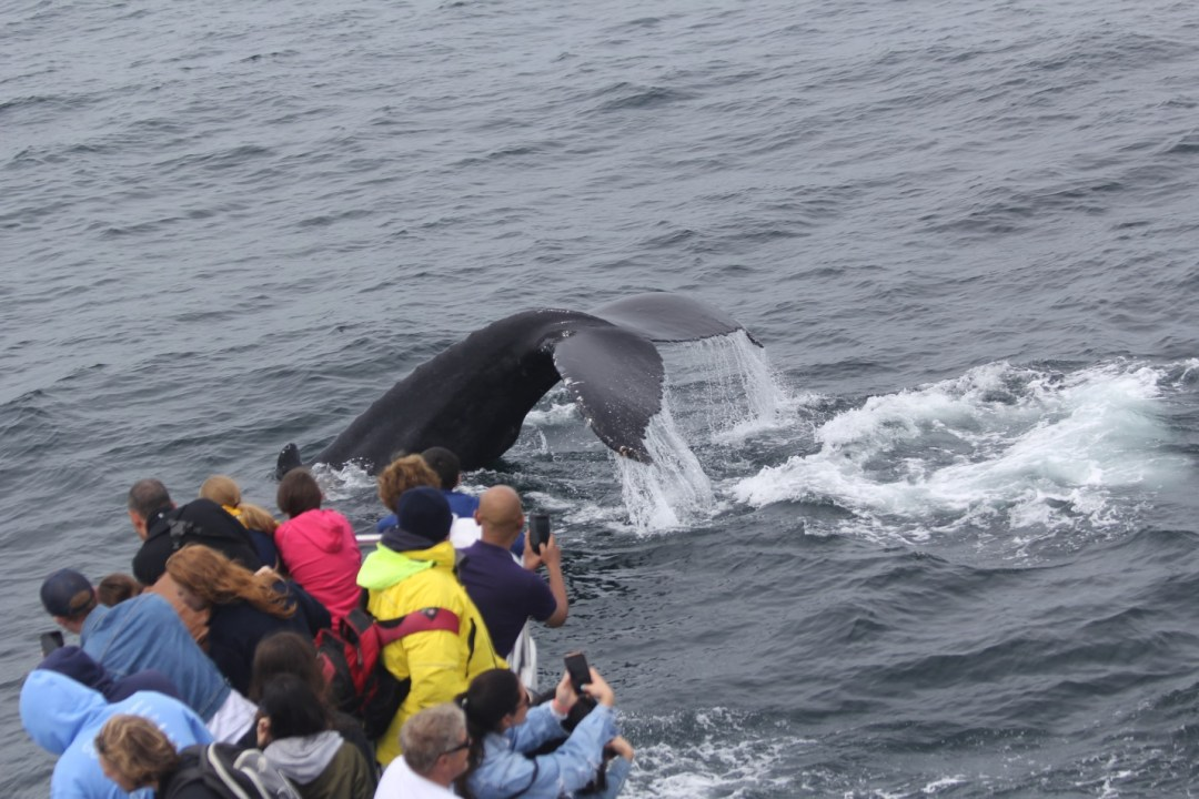 whale and passengers