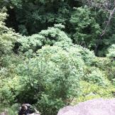 climbing-rocks-at-rattlesnake-point