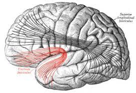 半側空間無視の慢性化に関係する領域はどこなのか?