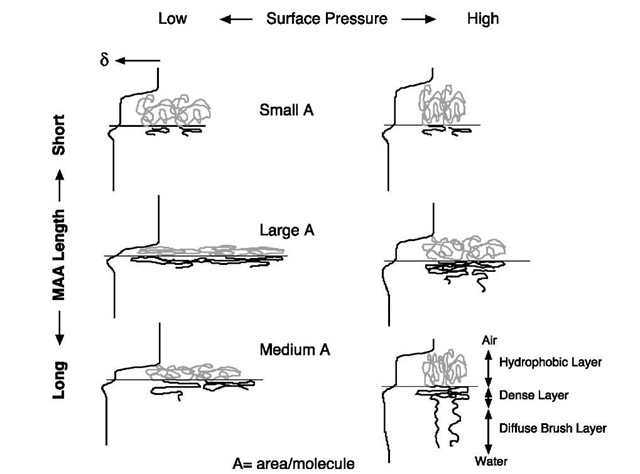 Nanostructure of Ionic Amphiphilic Block Copolymer