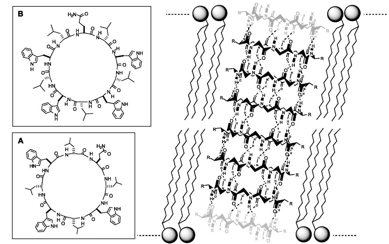 Self Assembly Of Cyclic Peptides In Hydrogen Bonded