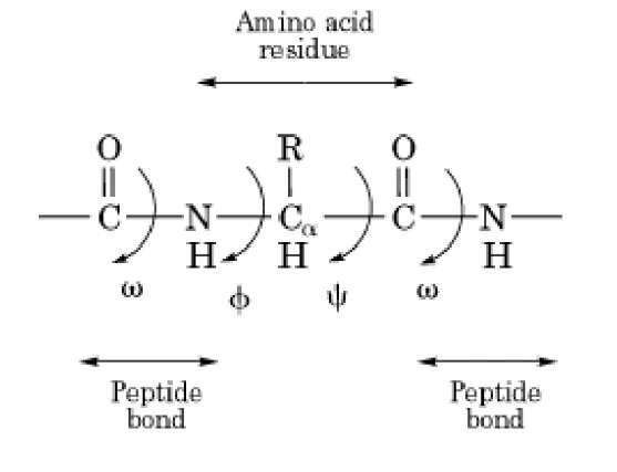Chapter 2 Chemistry of Cell Proteins Peptide bond Chemistry