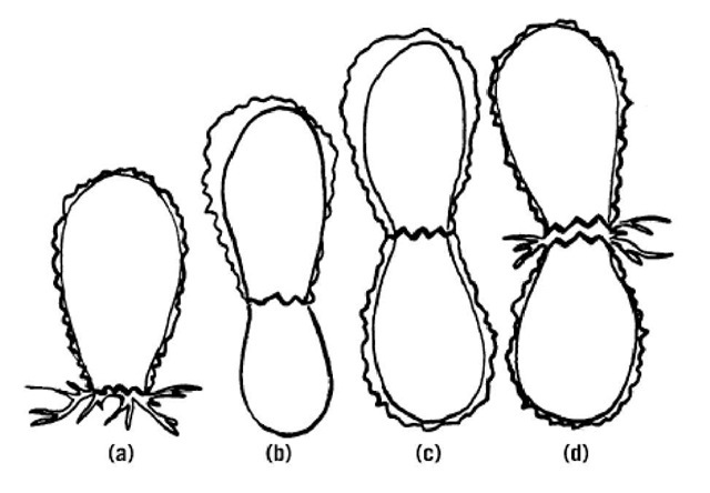 Maternal Genetic Effects (Molecular Biology)