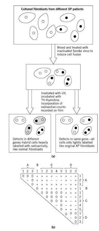 Complementation Tests (Molecular Biology)