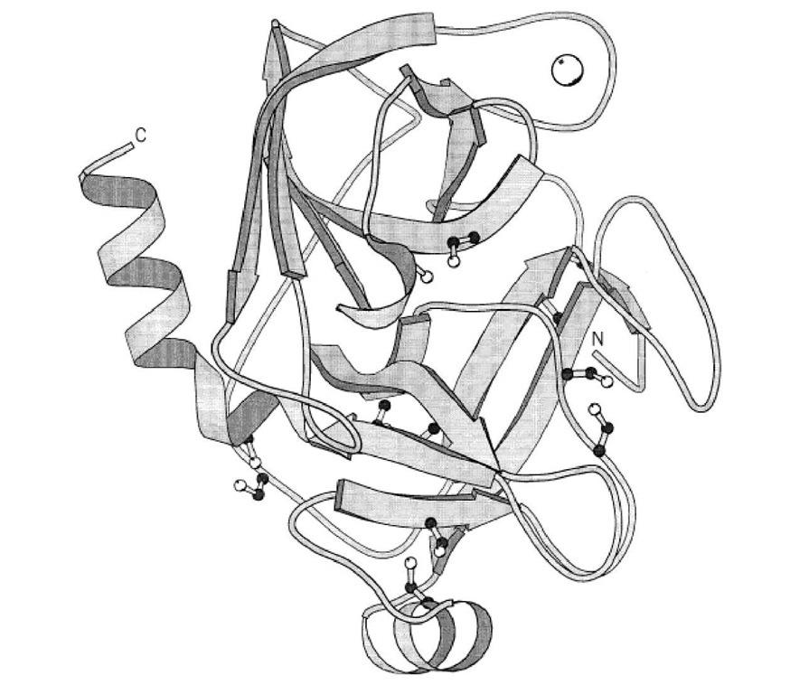 Trypsin, Trypsinogen (Molecular Biology)