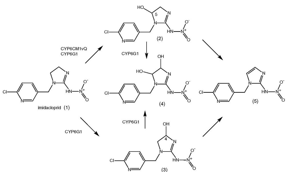 Insect CYP Genes and P450 Enzymes Part 8
