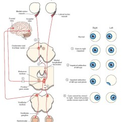 Diagram Of The Left Eye How To Draw Shear And Bending Moment Diagrams Cranial Nerves Organization Central Nervous System Part 5 Anatomical Substrates For Lateral Gaze Side Figure
