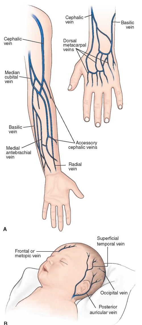 small resolution of commonly used infusion sites a ventral and dorsal aspects of arm and hand