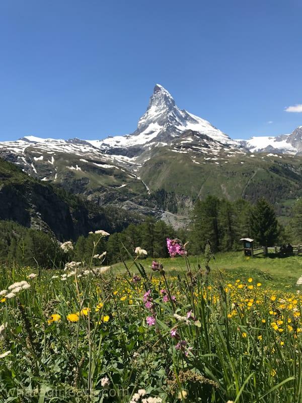 Zermatt Matterhorn in a field of flowers