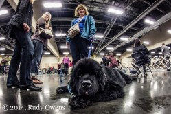 Dog Show Photograph