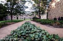 Greens, Ready to Pick, Concordia Seminary