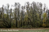 Scene from Lorane Highway, Lane County, Oregon
