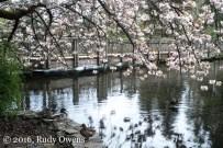 Garden Waterfowl Relaxing