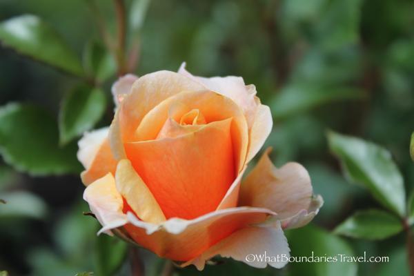 Beauty all Around the Garden