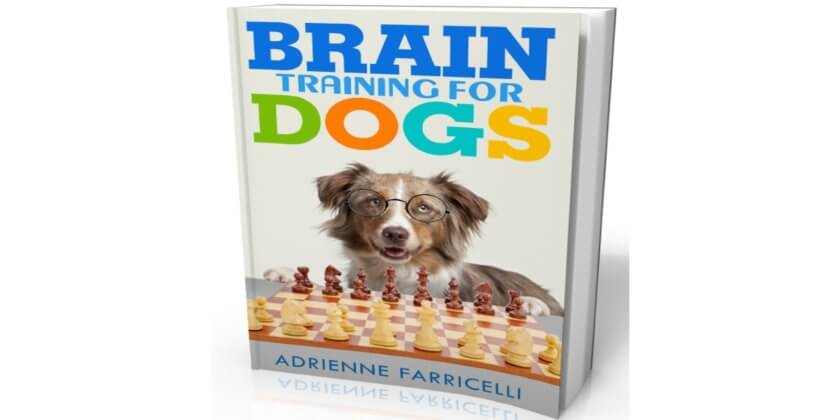 Brain Training For Dogs: What We Like to Play With Our Dogs