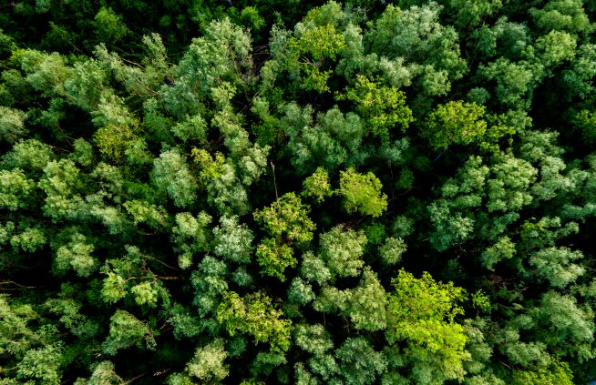 are we overestimating how much trees will help fight climate change - Are we overestimating how much trees will help fight climate change?