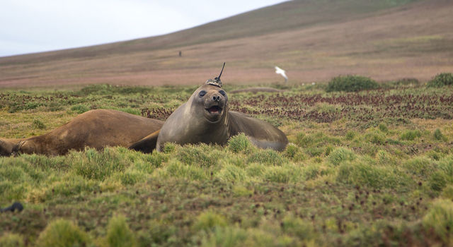seal takes ocean heat transport data to new depths - Seal Takes Ocean Heat Transport Data to New Depths