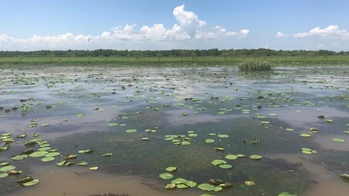 after covid 19 delay delta x field campaign begins in louisiana - After COVID-19 Delay, Delta-X Field Campaign Begins in Louisiana