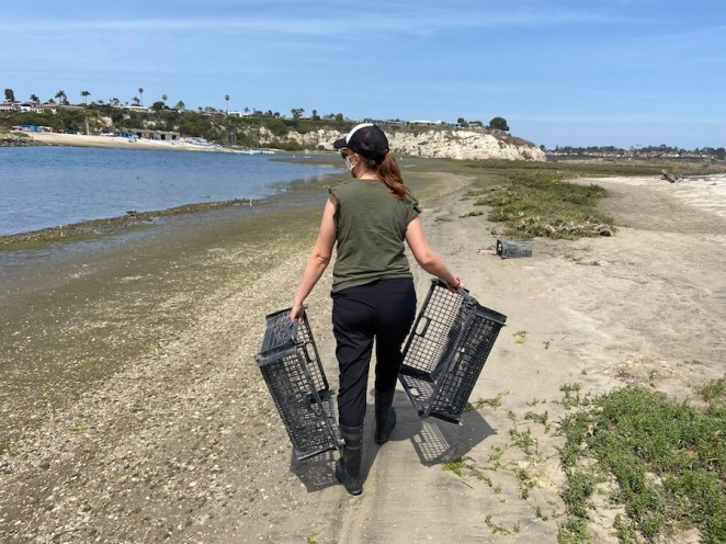 how oysters and seagrass could help the california coast adapt to rising seas - How oysters and seagrass could help the California coast adapt to rising seas