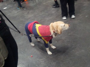 marvel dog2