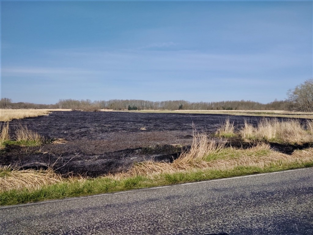 Scene of extinguished brush fire along west side of Ferndale Road between Slater Road and Marine Drive (April 8, 2020). Photo: My Ferndale News