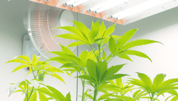 Grow Room Fan Size Calculator with Size-wise CFM