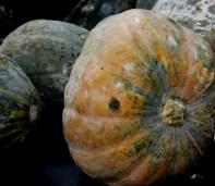 pumpkin squash