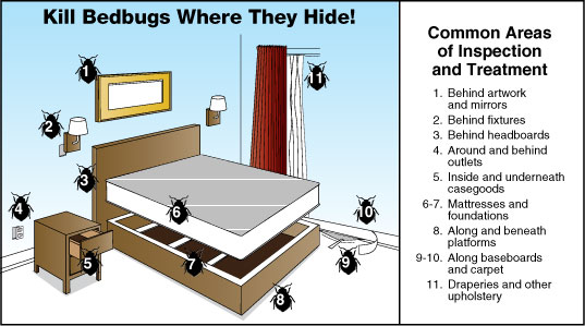 How To Get Rid Of Bed Bugs Best 12 Ways