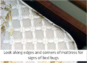 How To Get Rid Of Bed Bugs Best | Bed Bug Spray