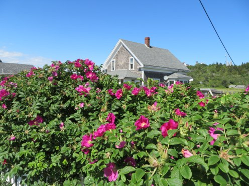 monhegan-2016-house-with-roses-1