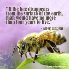 if the bee disappears…no more than 4 years