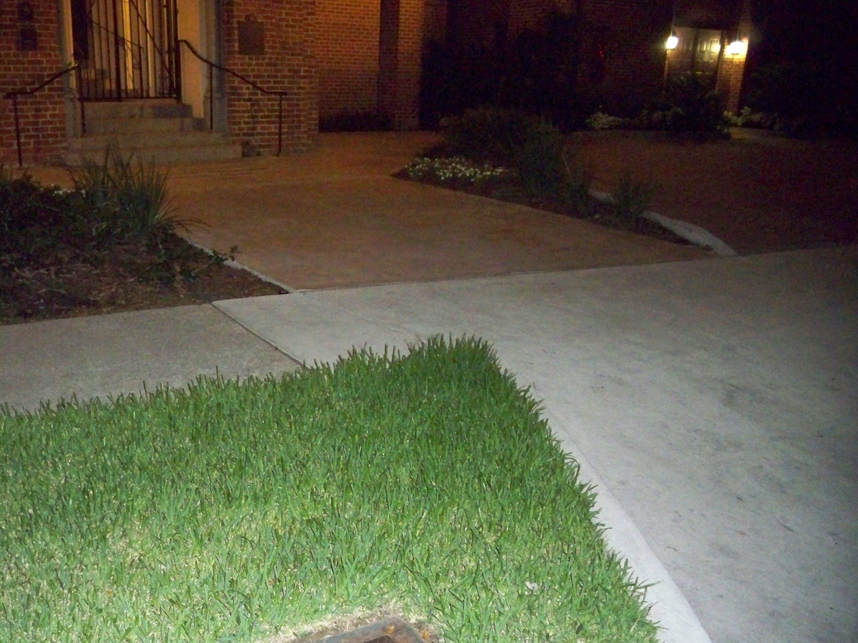 Tall Grass at Rayne Memorial Church