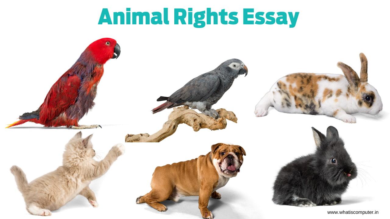 Animal-Rights-Essay