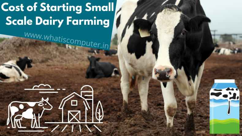 Cost of Starting Small Scale Dairy Farming