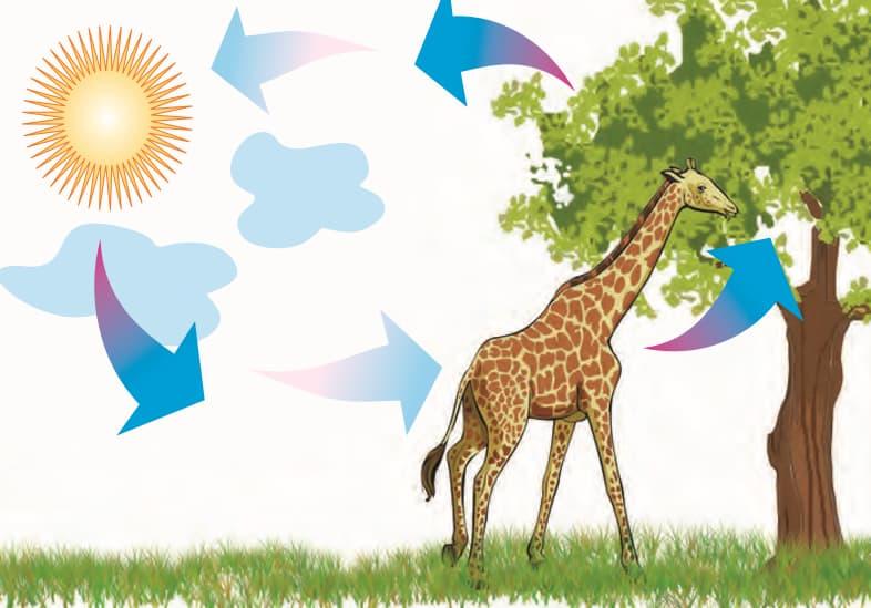 Environmental balance - sun zebra tree