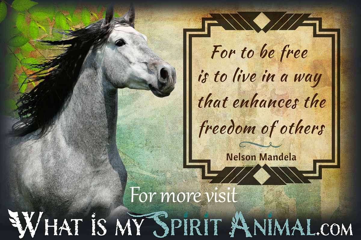 Horse Quotes & Sayings | Animal Quotes & Sayings