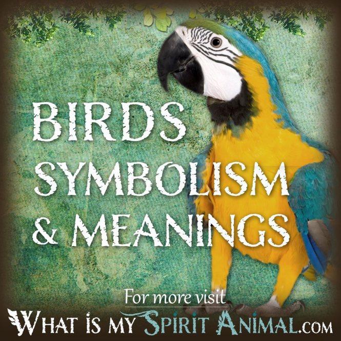 Lady Bird Spirit Animal Best Bird Colletion 2018
