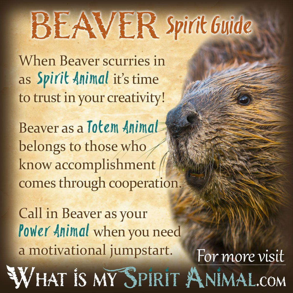 Beaver Symbolism  Meaning  Spirit Totem  Power Animal