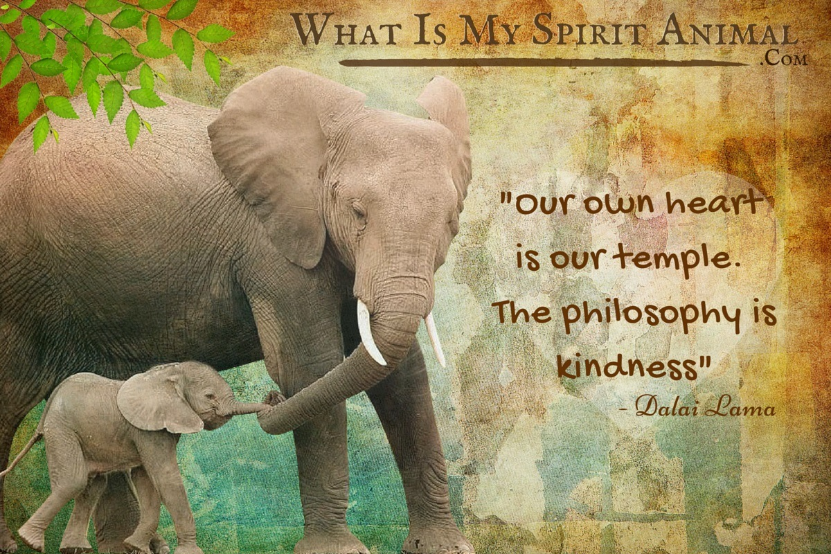 Elephant Quotes  Sayings  Animal Quotes  Sayings