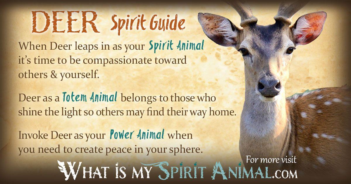 Deer Symbolism & Meaning   Spirit. Totem & Power Animal