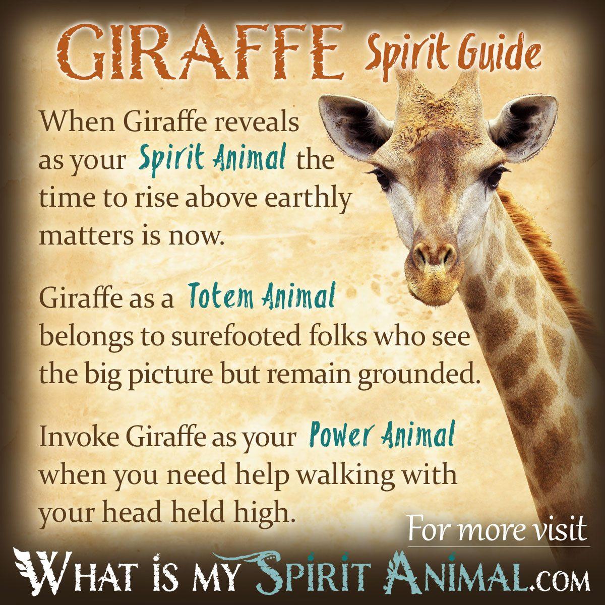 Giraffe Symbolism Amp Meaning